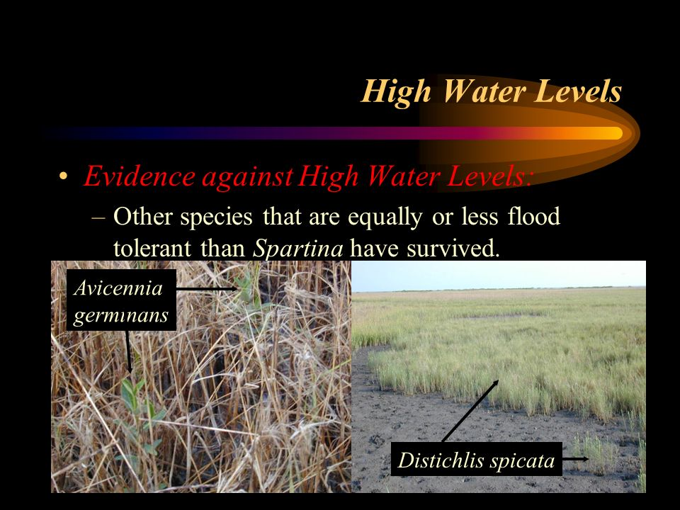 High Water Levels Evidence against High Water Levels: