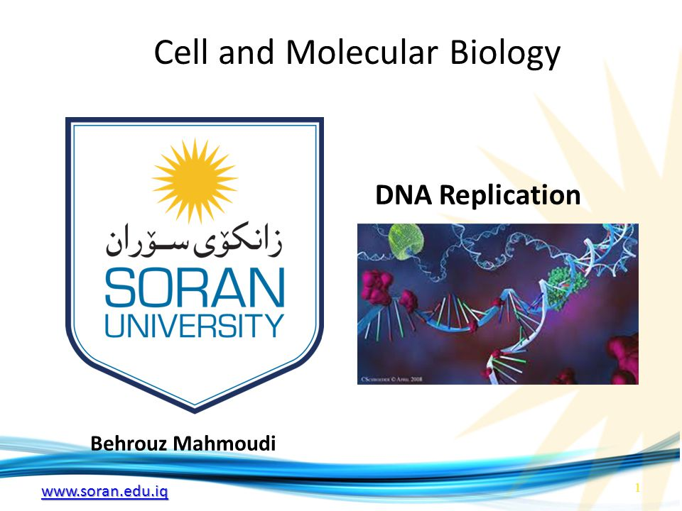 Cell and Molecular Biology