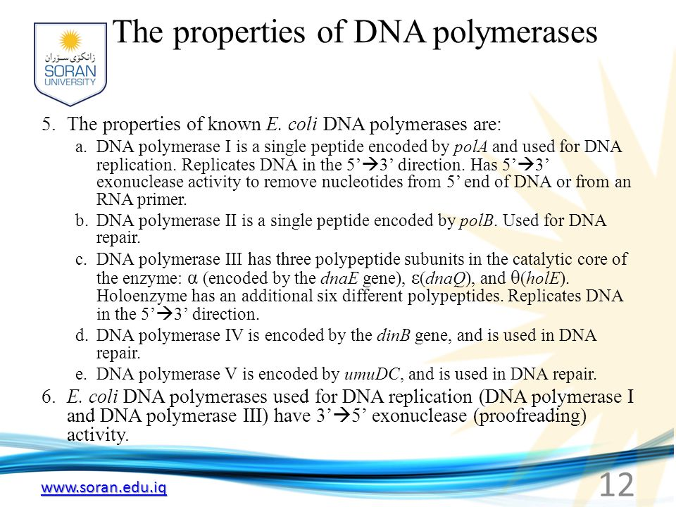 The properties of DNA polymerases