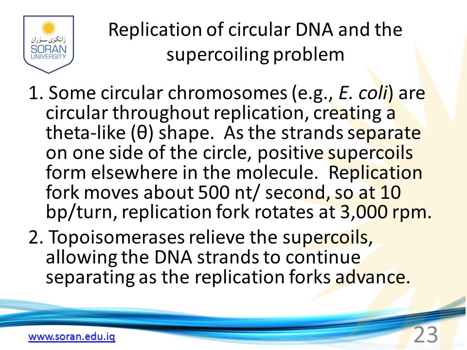 Replication of circular DNA and the supercoiling problem