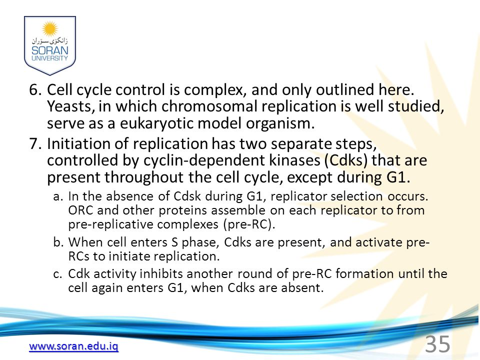 6. Cell cycle control is complex, and only outlined here