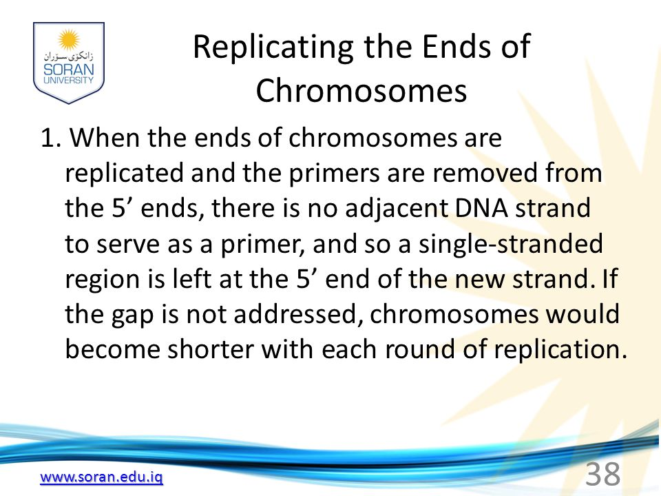 Replicating the Ends of Chromosomes