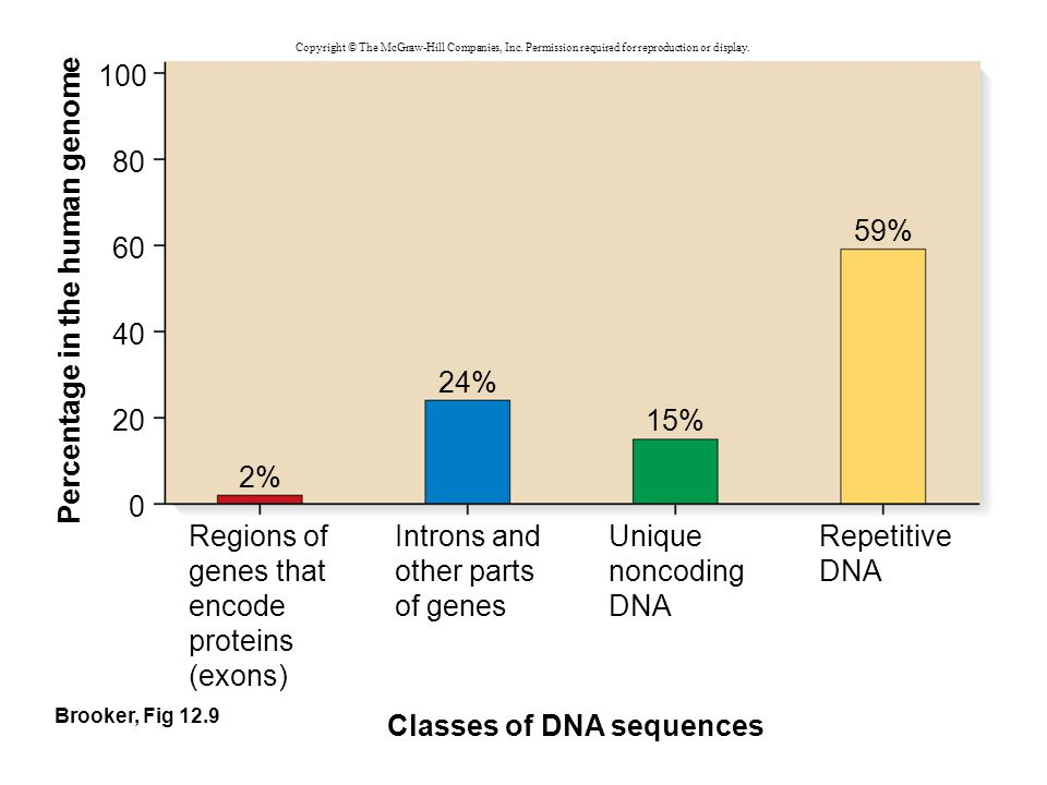 Percentage in the human genome