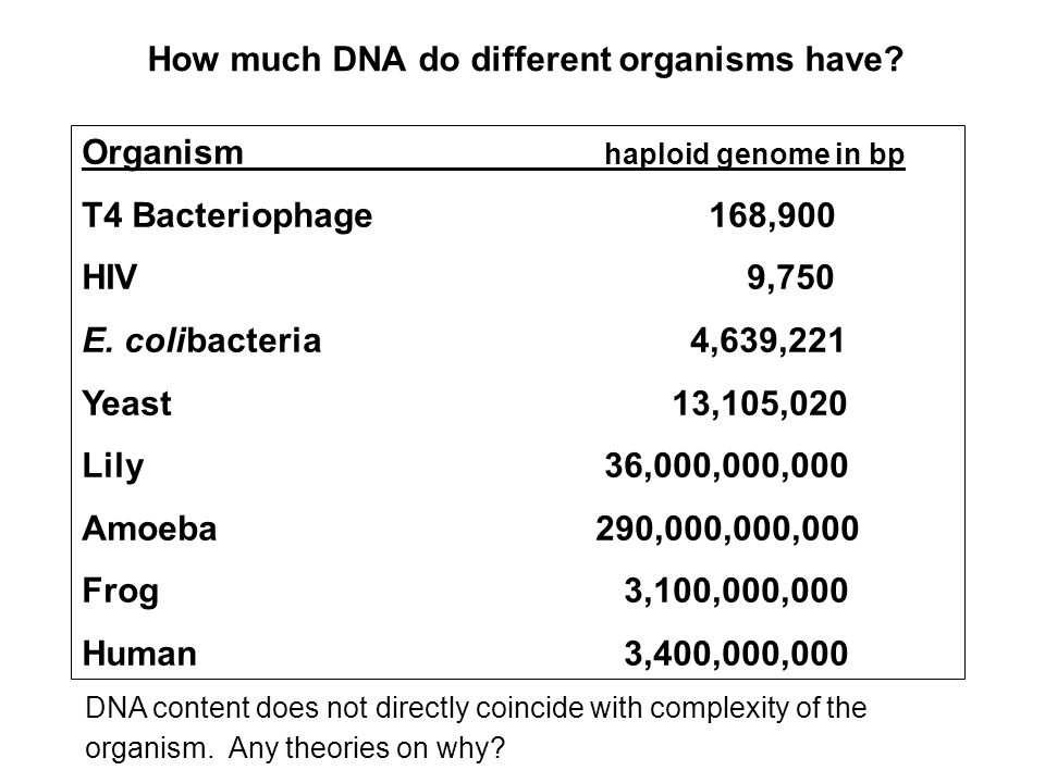 How much DNA do different organisms have