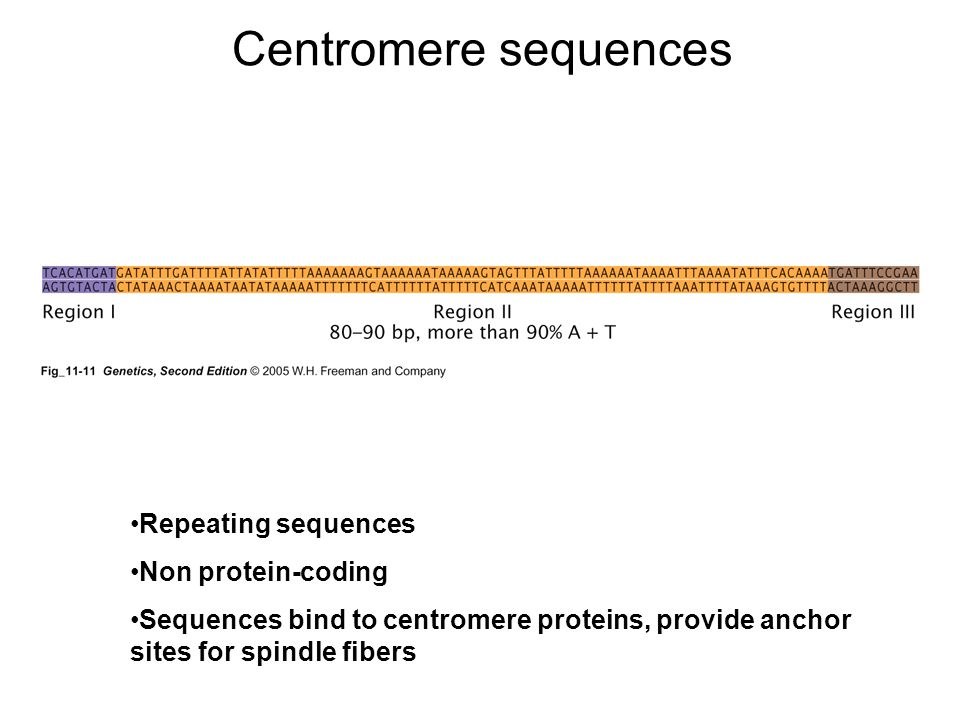Centromere sequences Repeating sequences Non protein-coding