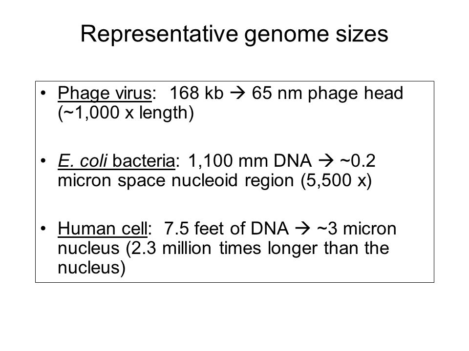 Representative genome sizes
