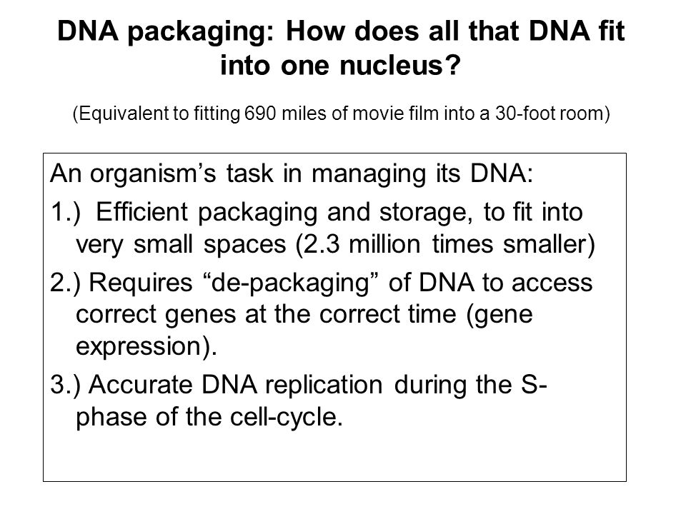 DNA packaging: How does all that DNA fit into one nucleus