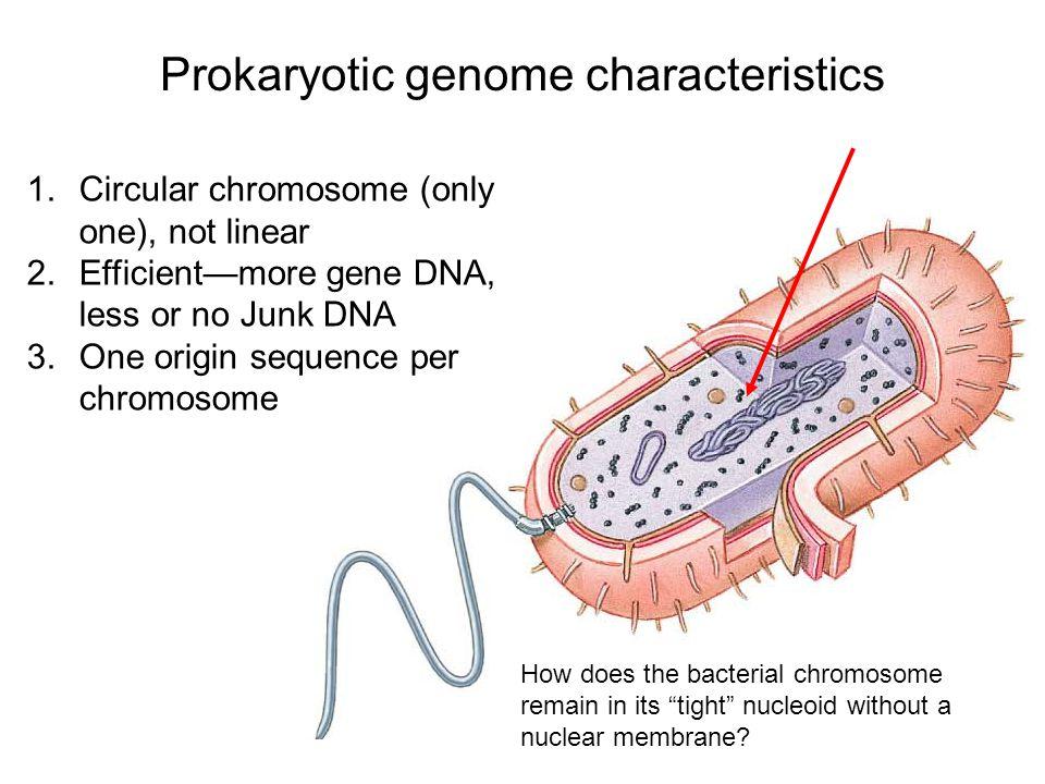 Prokaryotic genome characteristics