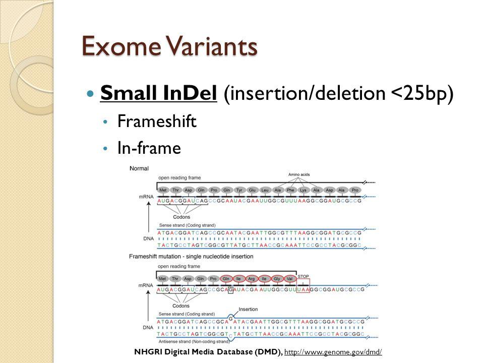 Exome Variants Small InDel (insertion/deletion <25bp) Frameshift