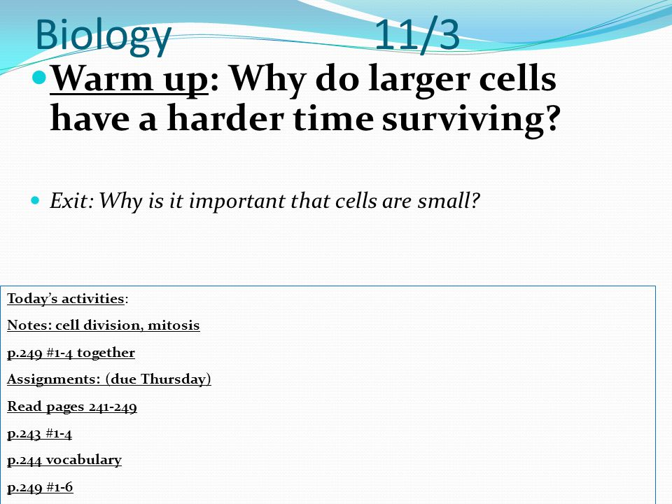 Biology 11/3 Warm up: Why do larger cells have a harder time surviving Exit: Why is it important that cells are small