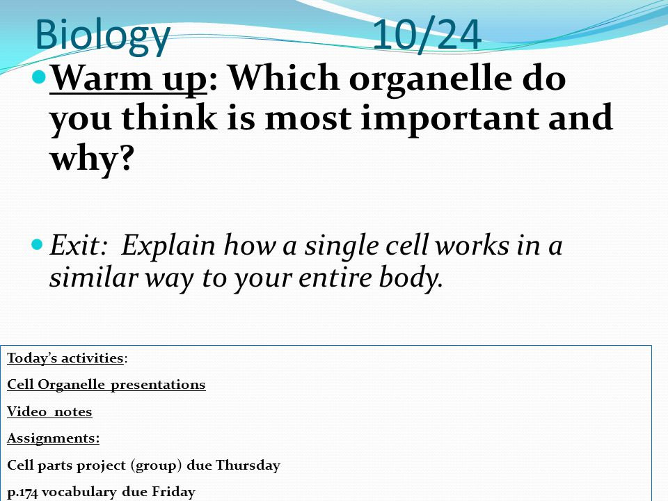 Biology 10/24 Warm up: Which organelle do you think is most important and why