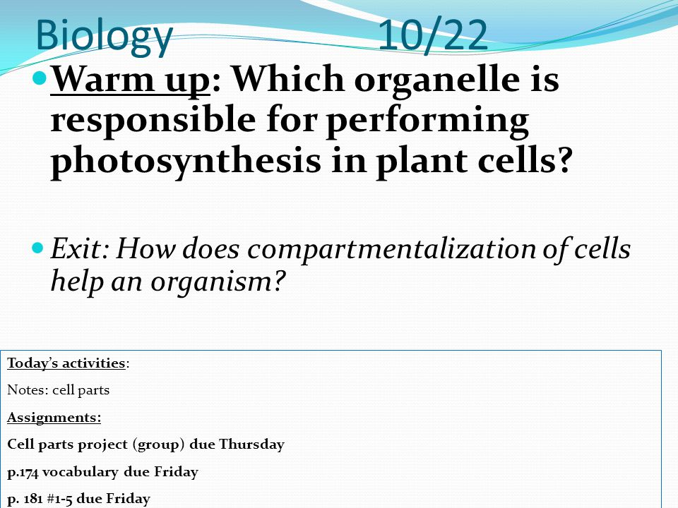 Biology 10/22 Warm up: Which organelle is responsible for performing photosynthesis in plant cells