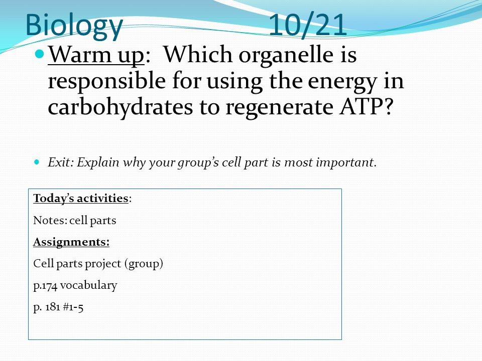 Biology 10/21 Warm up: Which organelle is responsible for using the energy in carbohydrates to regenerate ATP