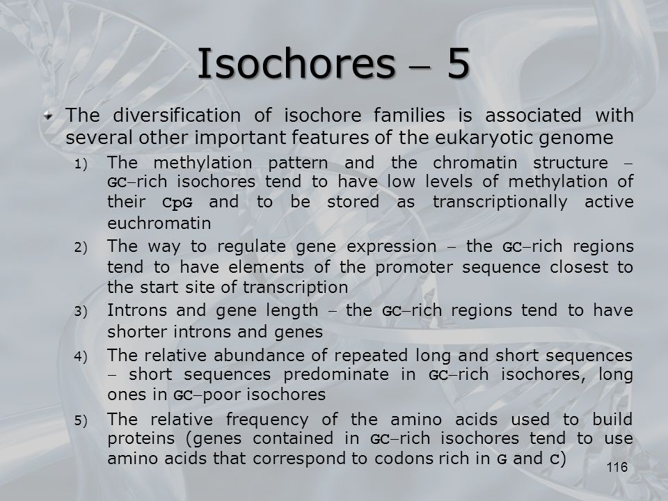 Isochores  5 The diversification of isochore families is associated with several other important features of the eukaryotic genome.