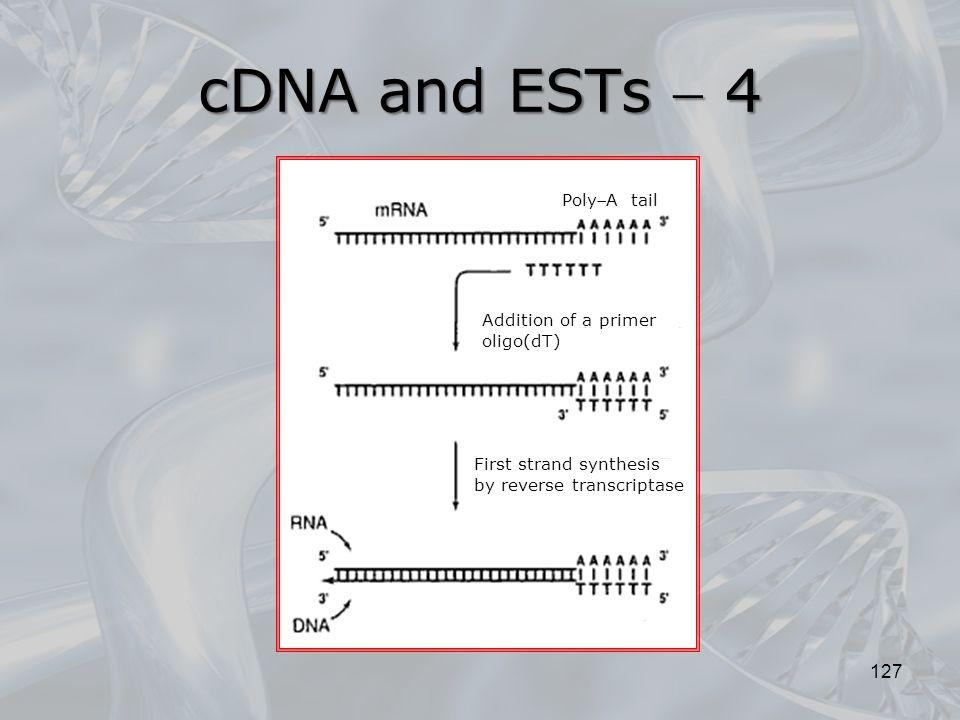 cDNA and ESTs  4 PolyA tail Addition of a primer oligo(dT)