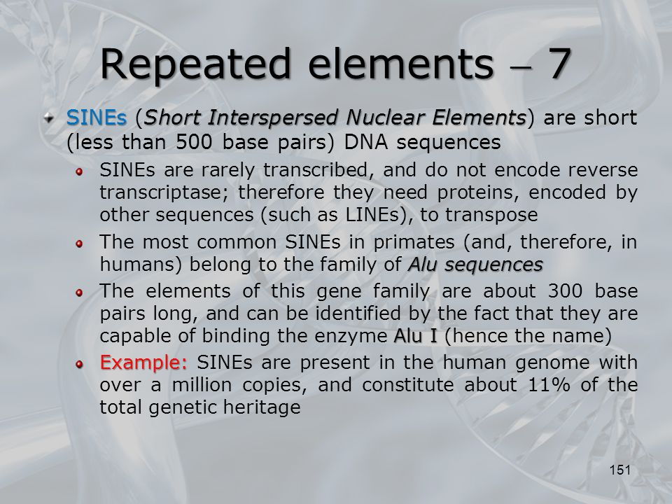 Repeated elements  7 SINEs (Short Interspersed Nuclear Elements) are short (less than 500 base pairs) DNA sequences.