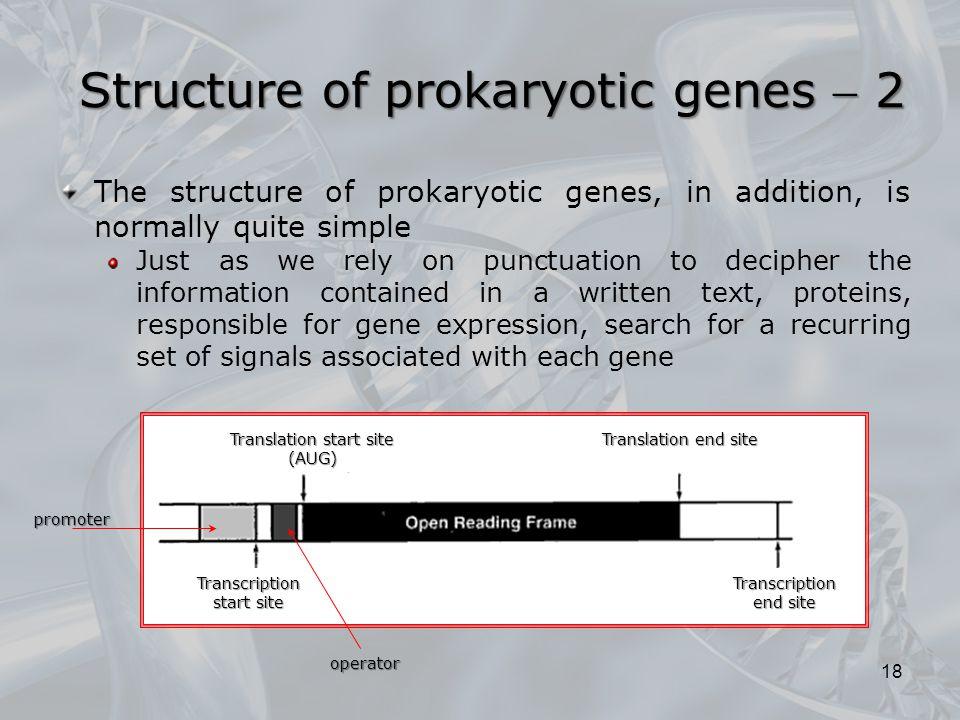 Structure of prokaryotic genes  2