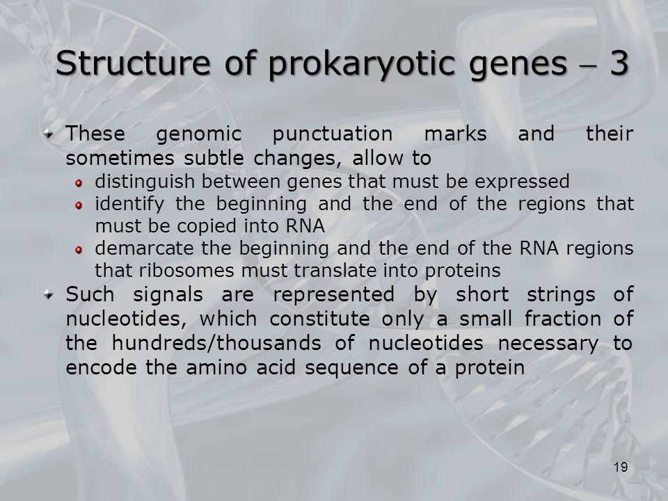Structure of prokaryotic genes  3