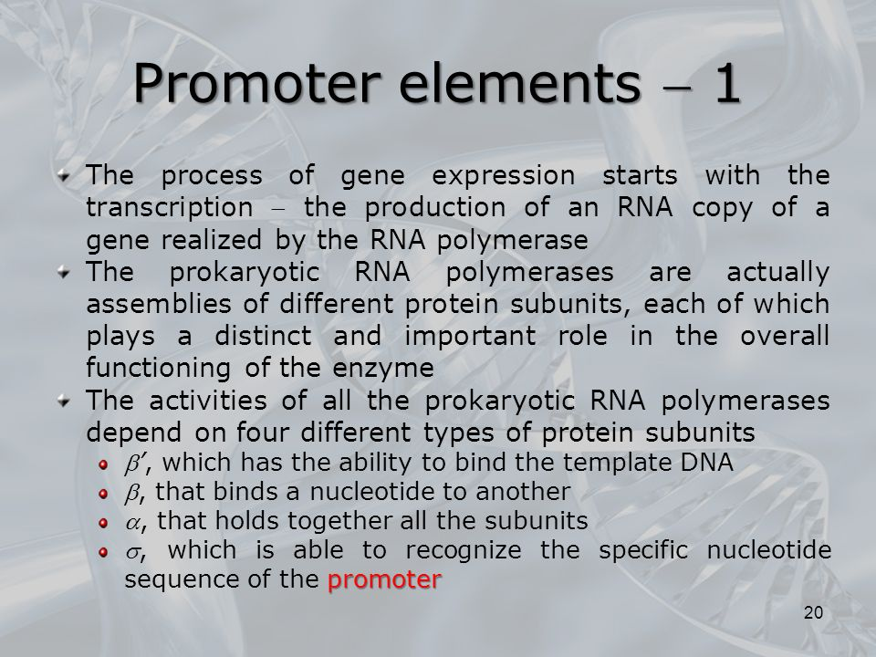 Promoter elements  1