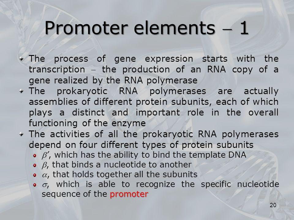 Promoter elements  1