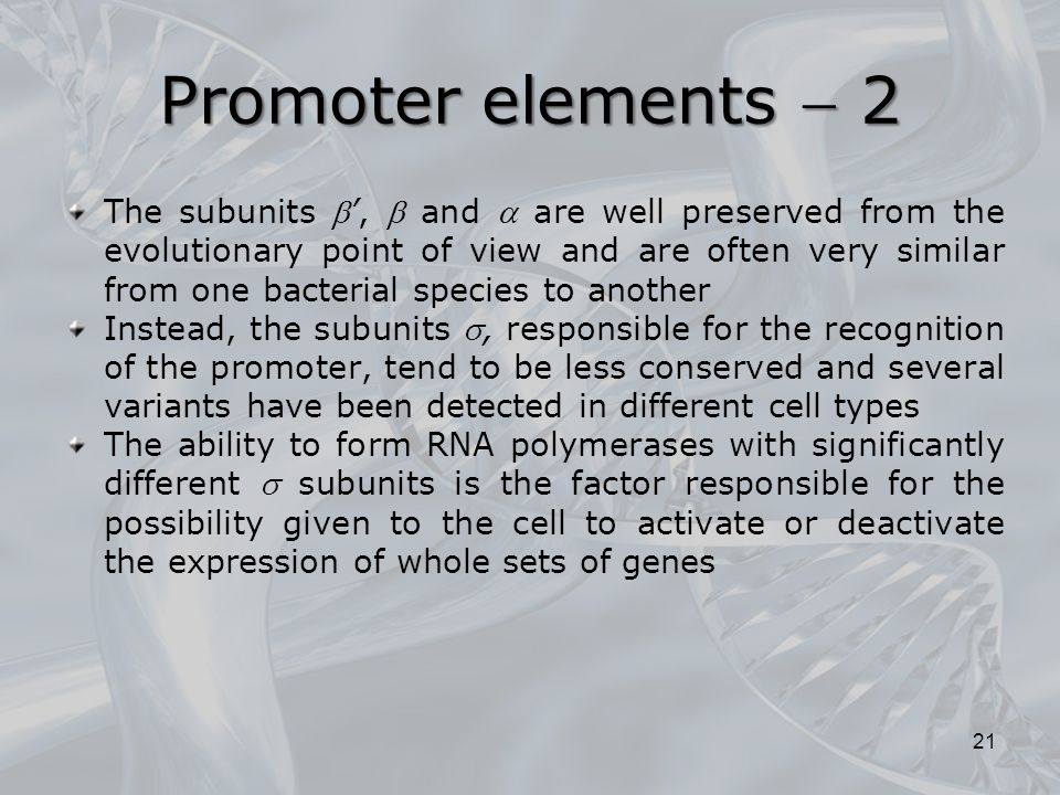 Promoter elements  2
