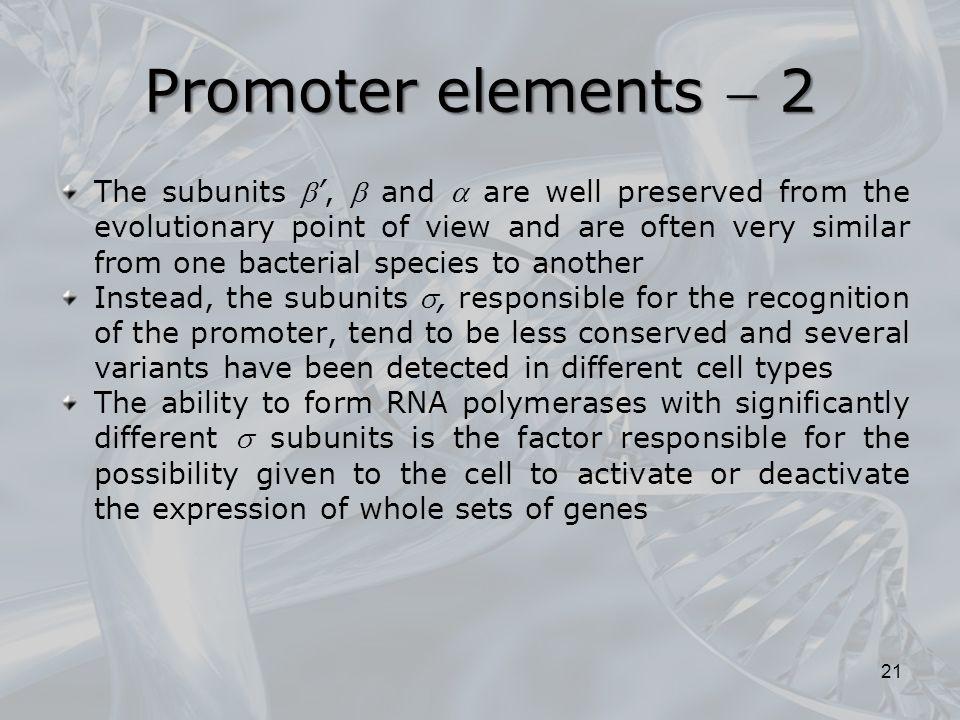 Promoter elements  2
