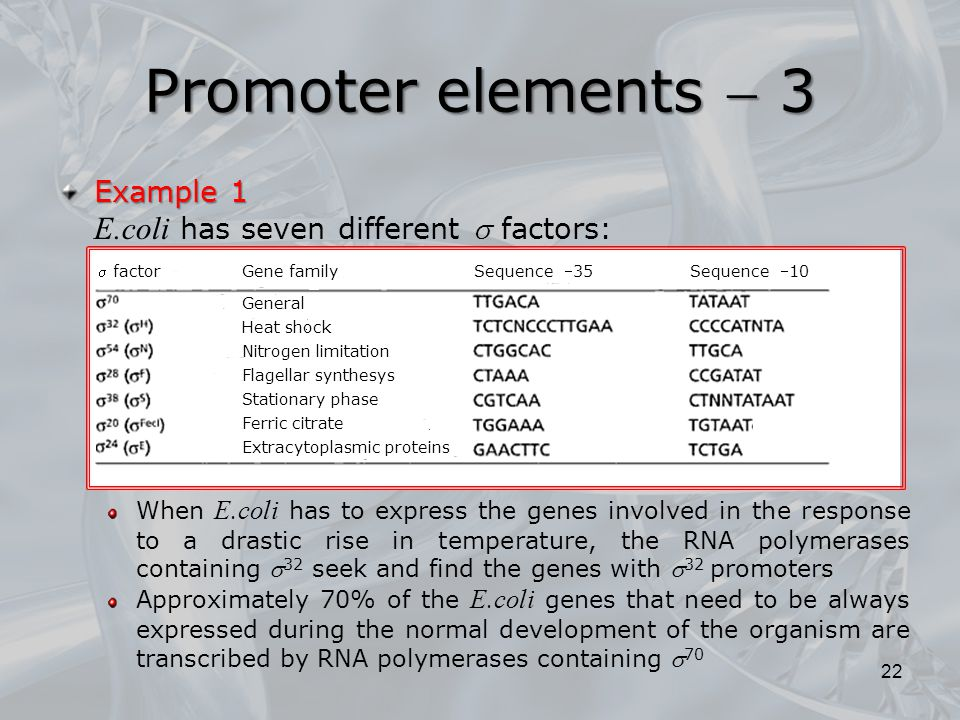 Promoter elements  3 E.coli has seven different  factors: Example 1
