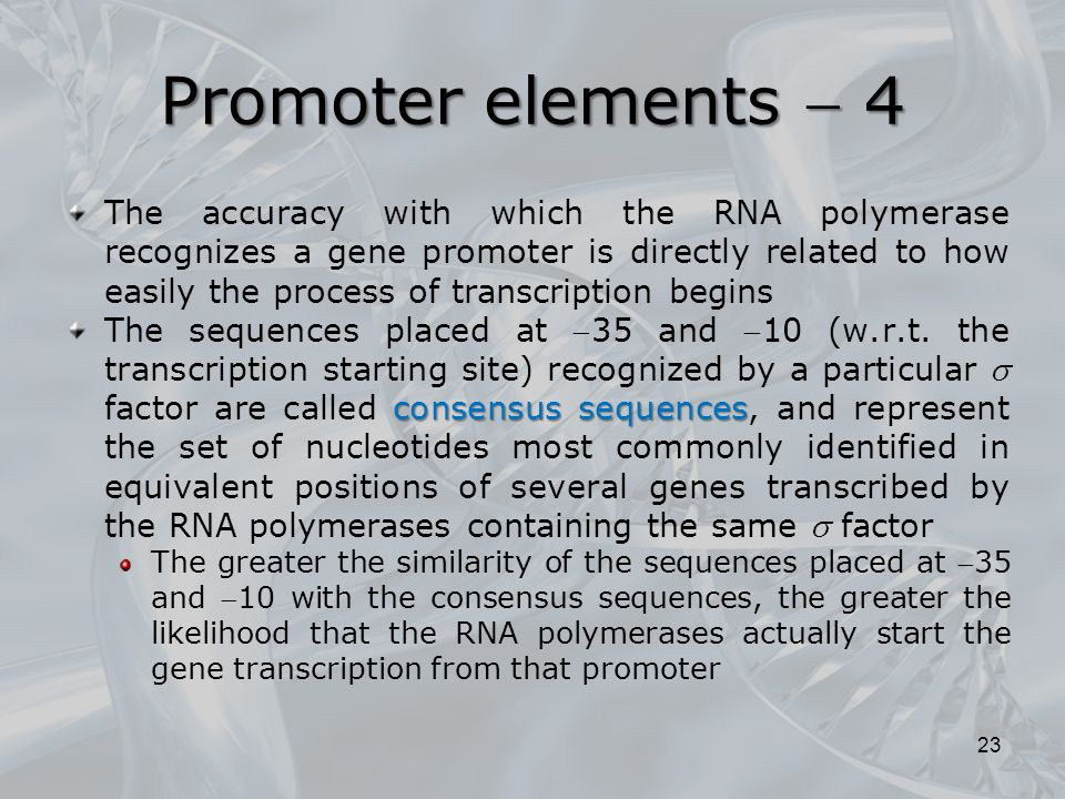 Promoter elements  4