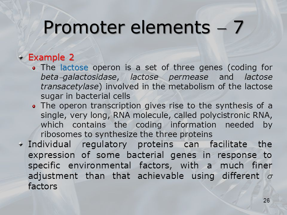 Promoter elements  7 Example 2