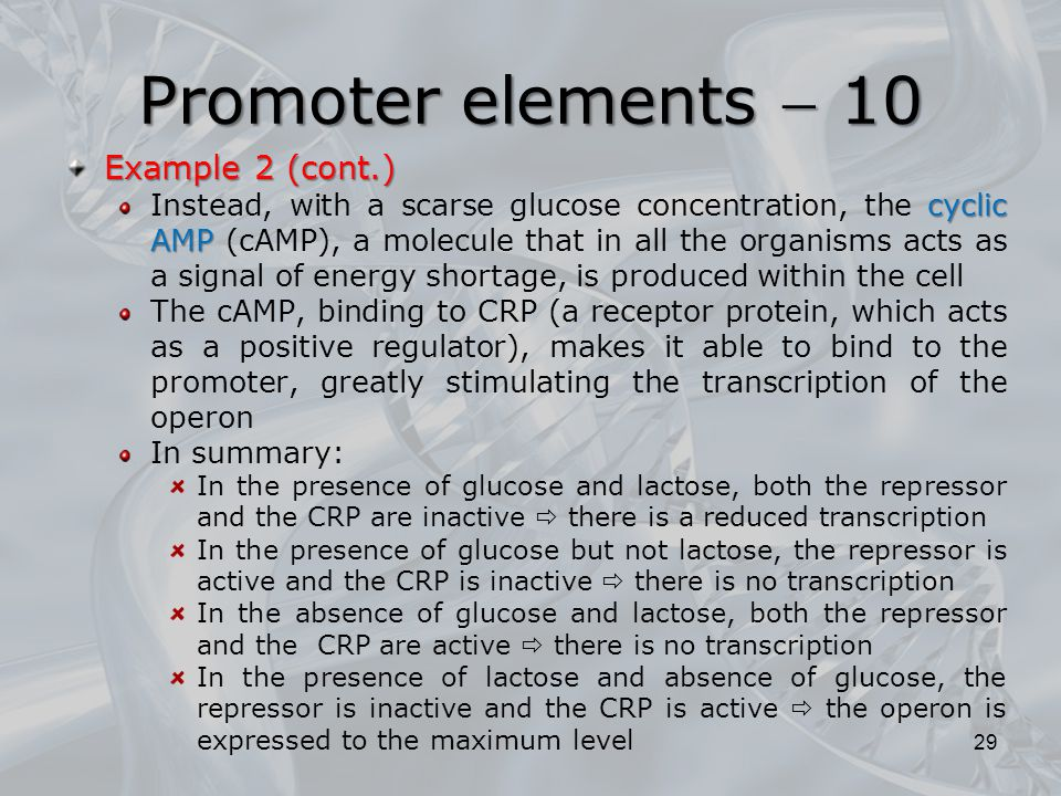 Promoter elements  10 Example 2 (cont.)