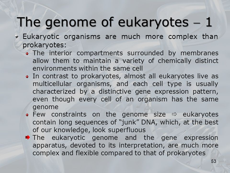 The genome of eukaryotes  1