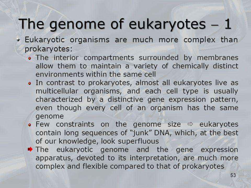 The genome of eukaryotes  1