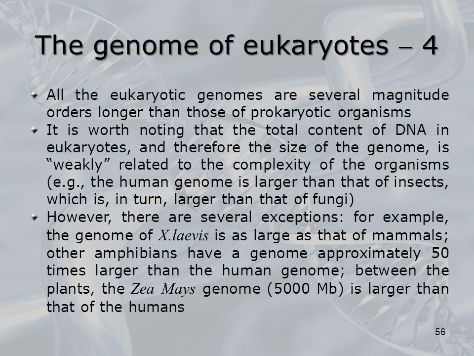 The genome of eukaryotes  4