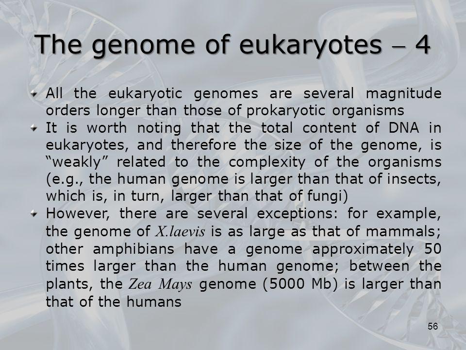 The genome of eukaryotes  4