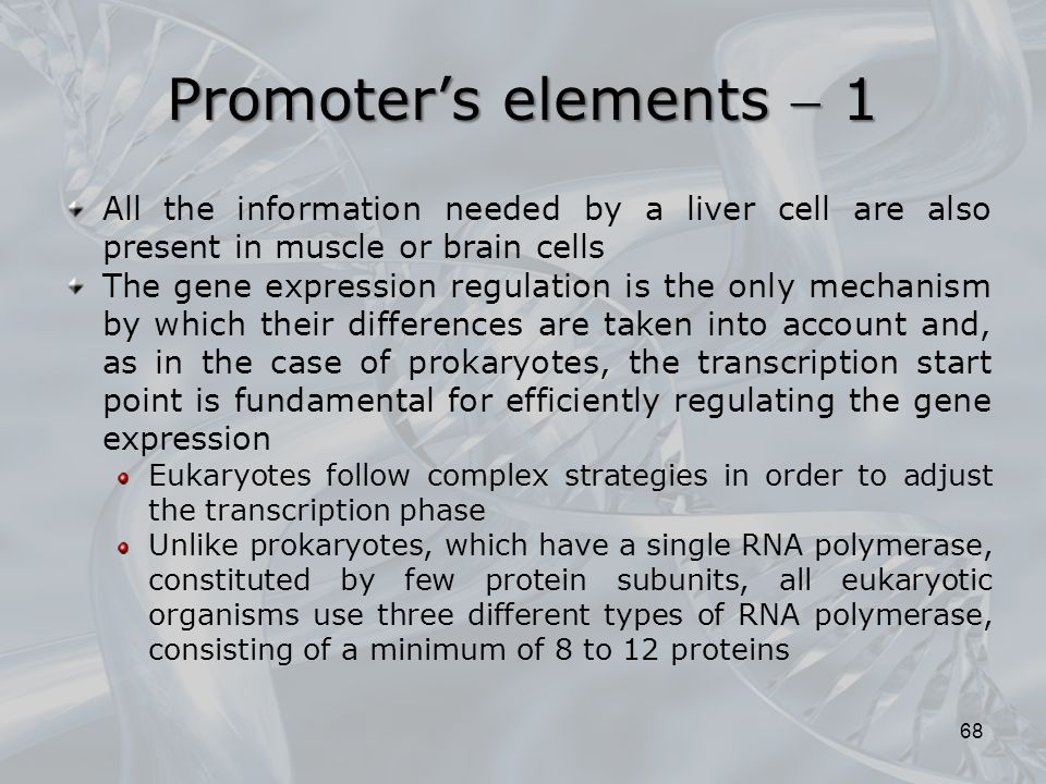 Promoter's elements  1 All the information needed by a liver cell are also present in muscle or brain cells.