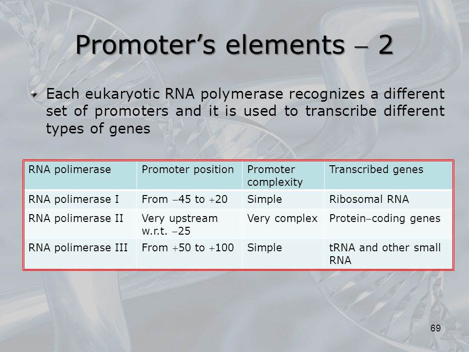Promoter's elements  2 Each eukaryotic RNA polymerase recognizes a different set of promoters and it is used to transcribe different types of genes.