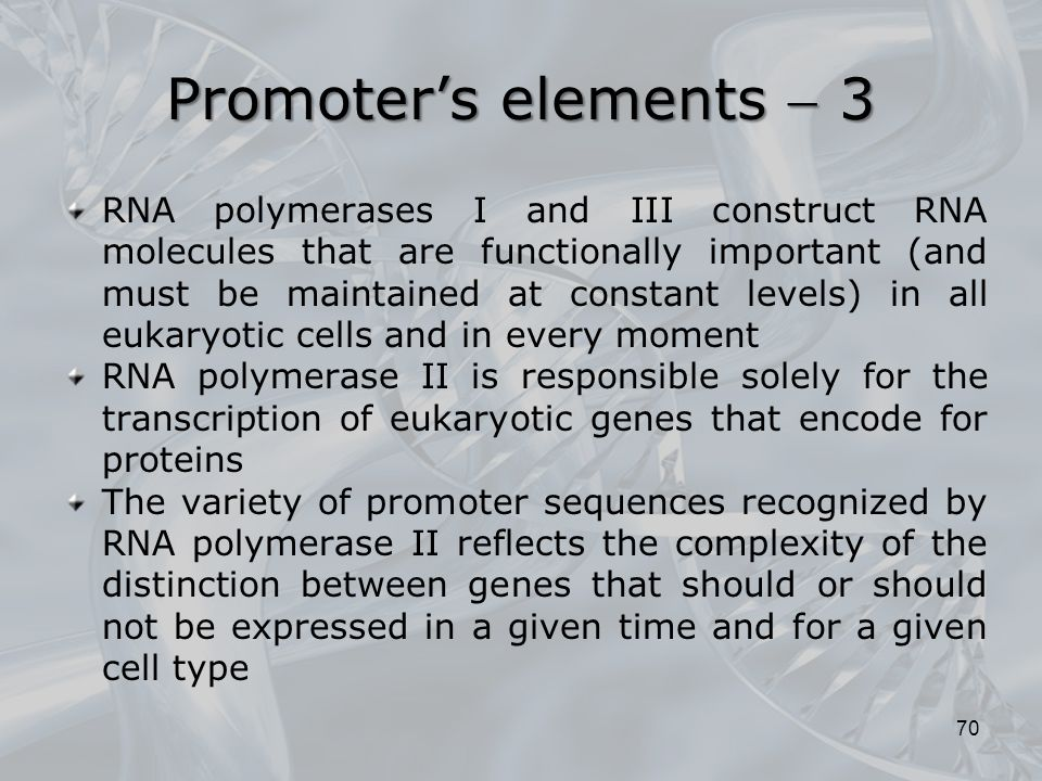 Promoter's elements  3