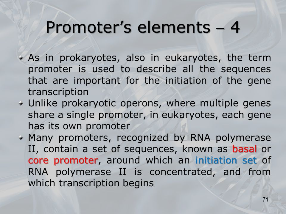 Promoter's elements  4