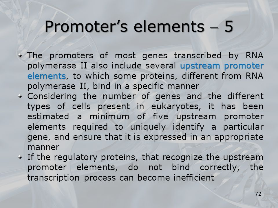Promoter's elements  5