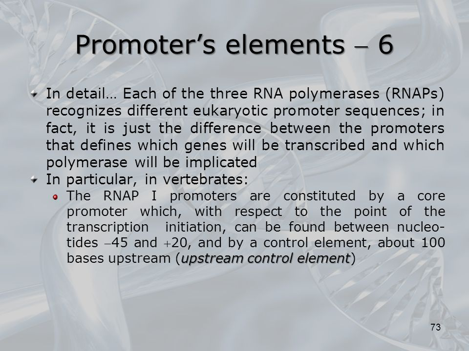Promoter's elements  6