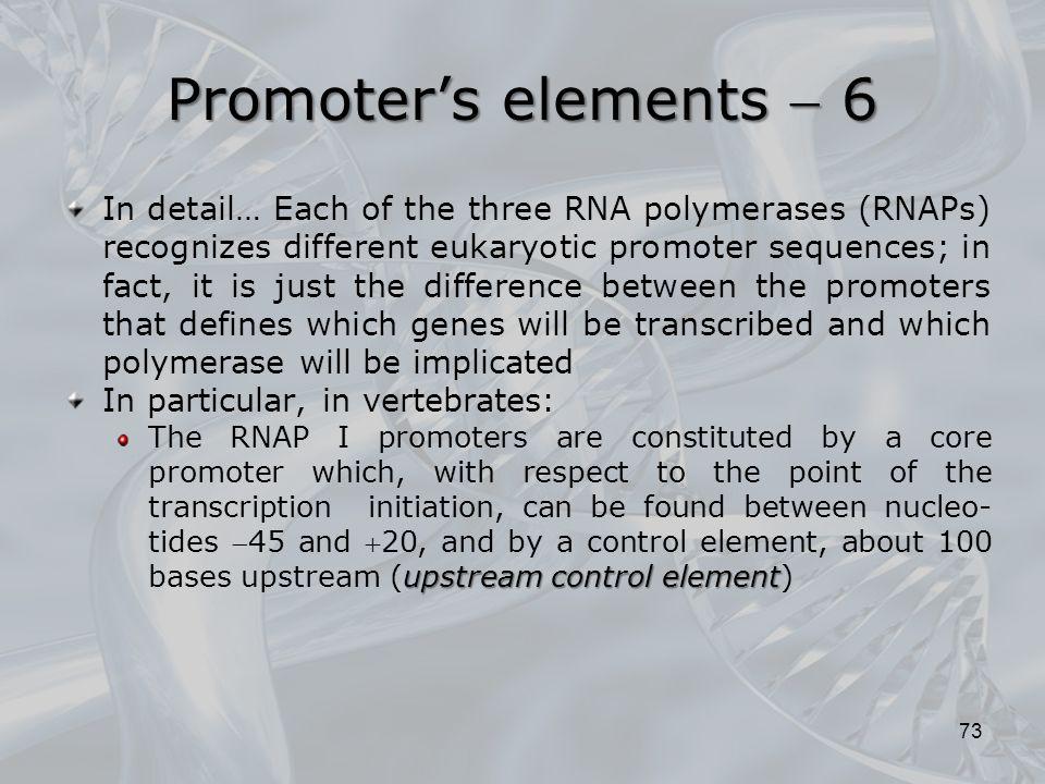 Promoter's elements  6