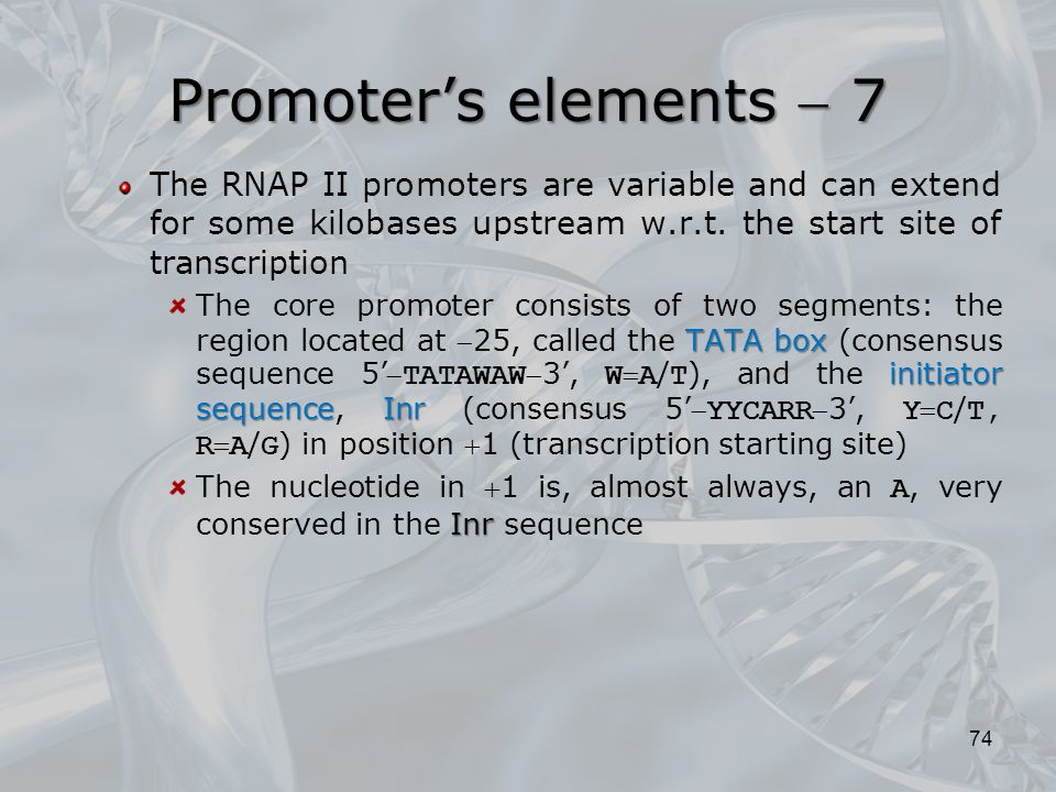 Promoter's elements  7 The RNAP II promoters are variable and can extend for some kilobases upstream w.r.t. the start site of transcription.
