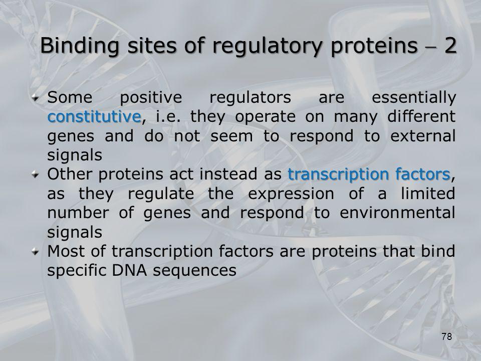 Binding sites of regulatory proteins  2