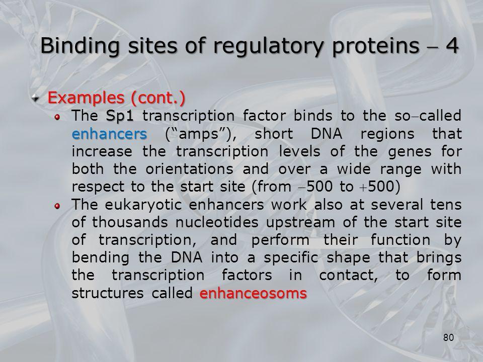 Binding sites of regulatory proteins  4