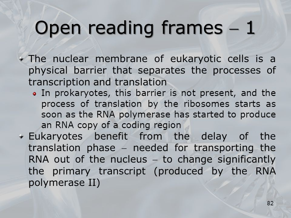 Open reading frames  1 The nuclear membrane of eukaryotic cells is a physical barrier that separates the processes of transcription and translation.