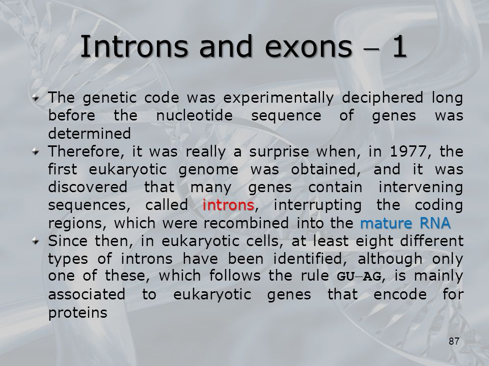 Introns and exons  1 The genetic code was experimentally deciphered long before the nucleotide sequence of genes was determined.