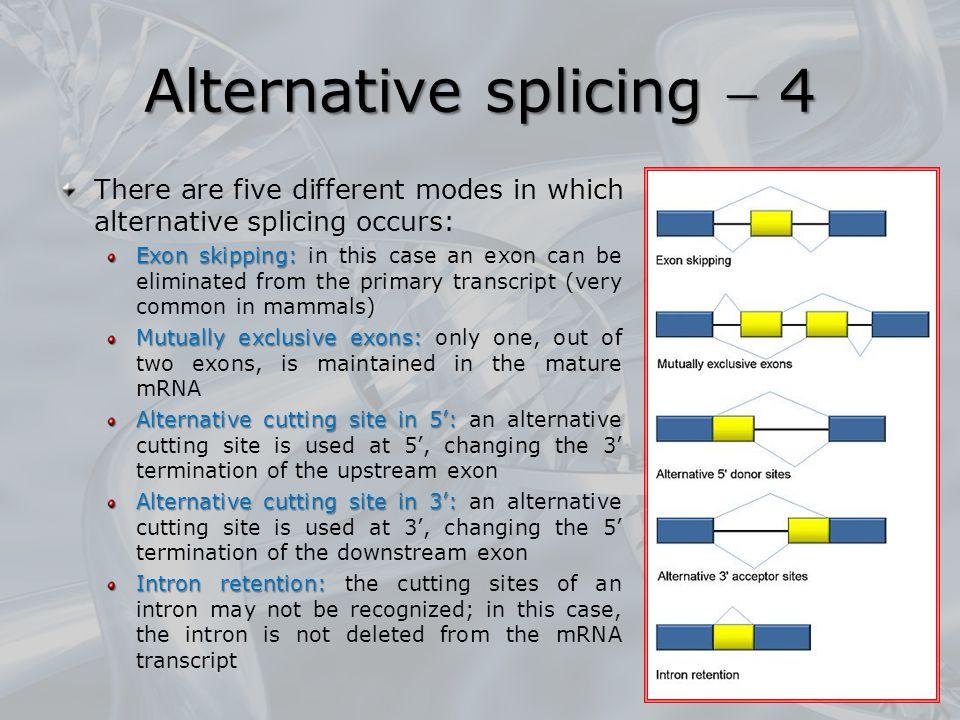 Alternative splicing  4