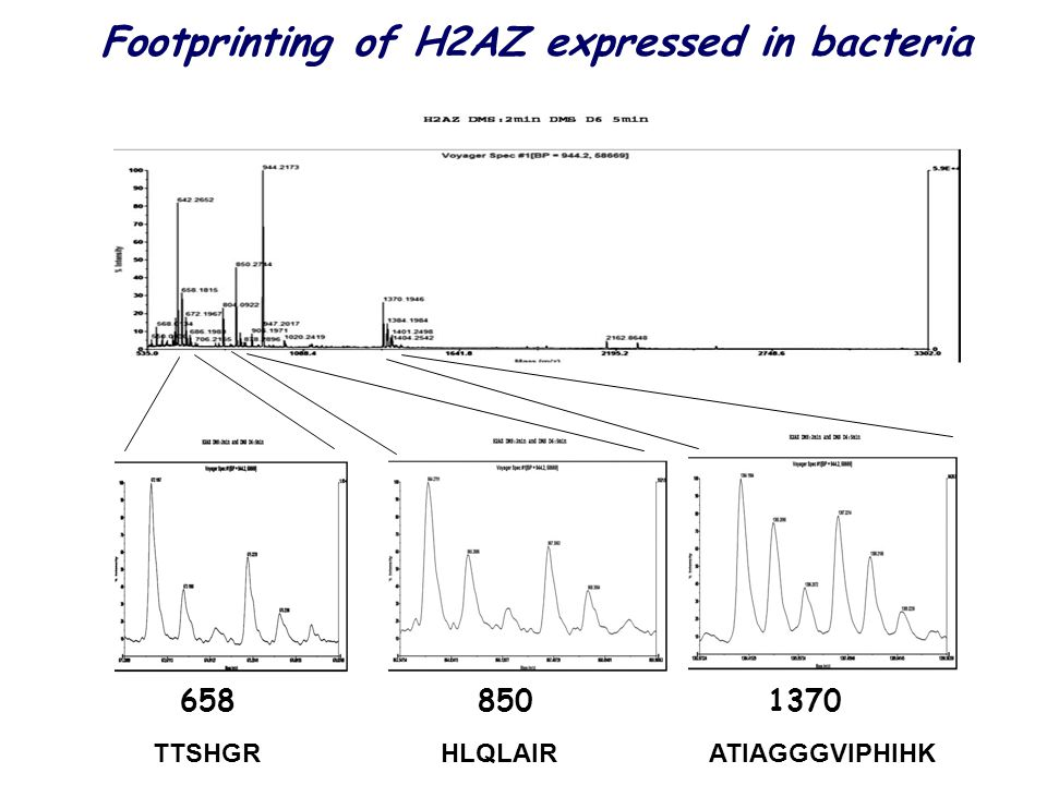 Footprinting of H2AZ expressed in bacteria