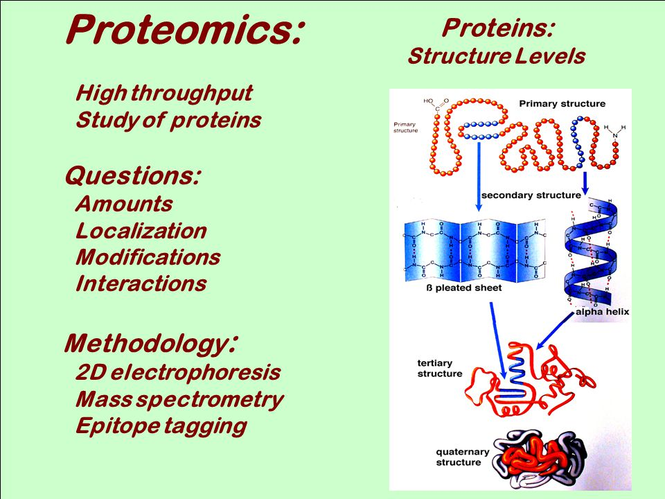 Proteomics: Questions: Methodology: Proteins: Structure Levels
