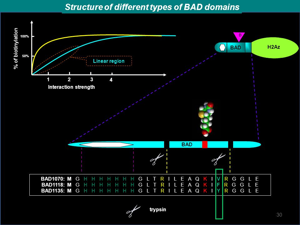Structure of different types of BAD domains